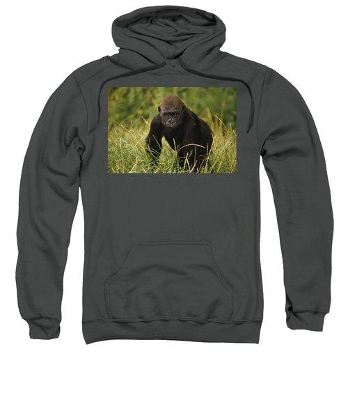 Western Lowland Gorilla Juvenile Sweatshirt by Gerry Ellis