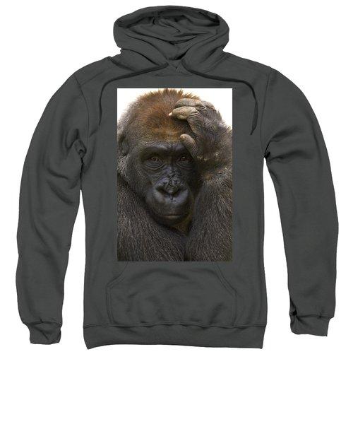 Western Lowland Gorilla With Hand Sweatshirt by San Diego Zoo