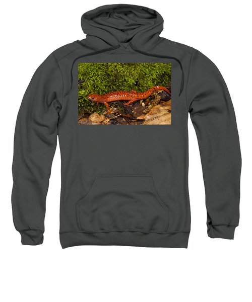 Red Salamander Pseudotriton Ruber Sweatshirt by Pete Oxford