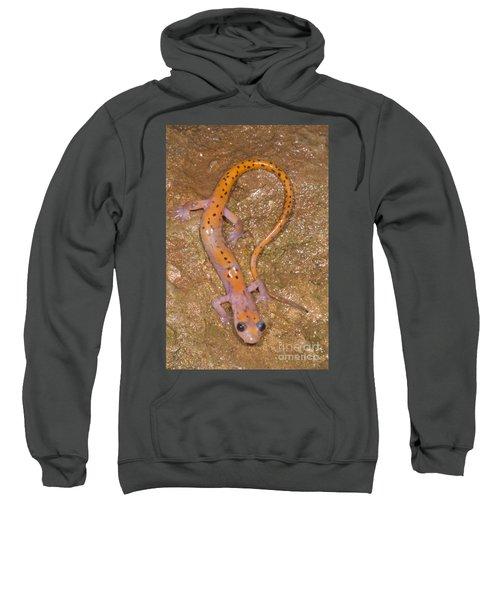 Cave Salamander Sweatshirt by Dante Fenolio