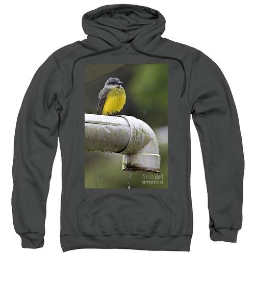 Grey-capped Flycatcher Sweatshirt by Heiko Koehrer-Wagner