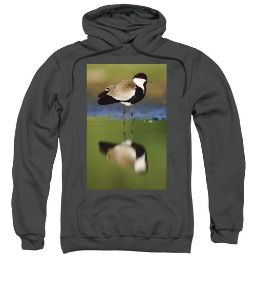 Spur Winged Plover With Its Reflection Sweatshirt by Tim Fitzharris