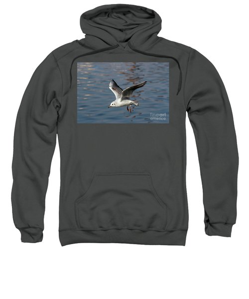 Flying Gull Sweatshirt by Michal Boubin
