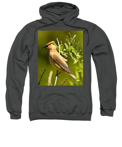 Cedar Waxwing Closeup Sweatshirt by Adam Jewell