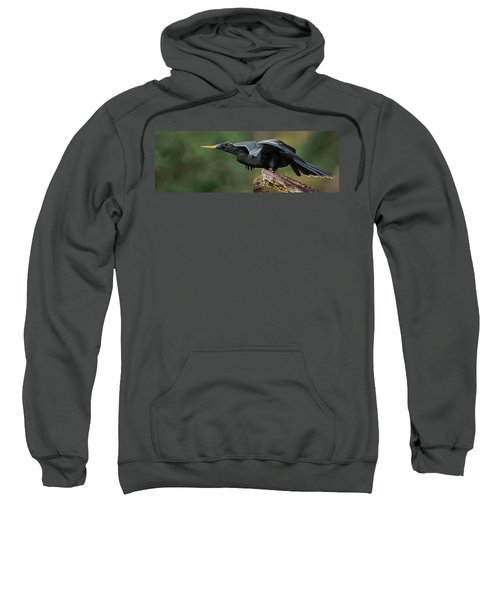 Anhinga Anhinga Anhinga, Costa Rica Sweatshirt by Panoramic Images