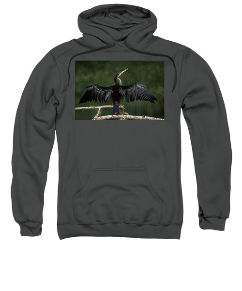 Anhinga Anhinga Anhinga Perching Sweatshirt by Panoramic Images