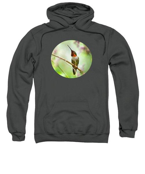 Hummingbird Looking For Love Sweatshirt by Christina Rollo