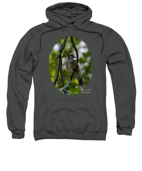 Afternoon Perch Sweatshirt by Brian Manfra