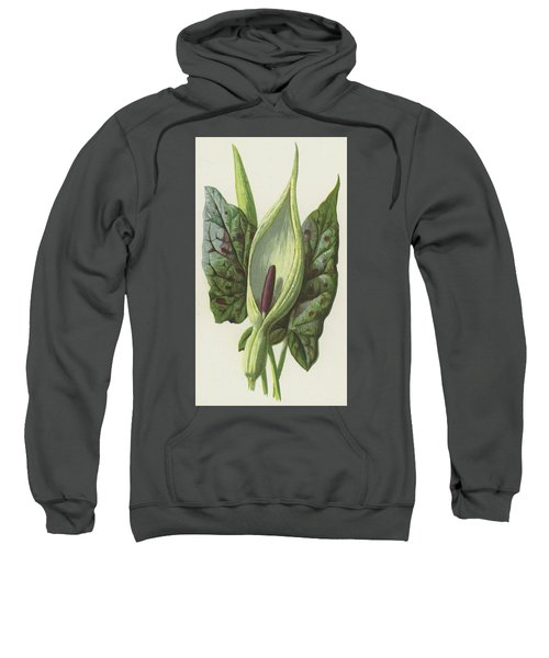 Arum, Cuckoo Pint Sweatshirt by Frederick Edward Hulme