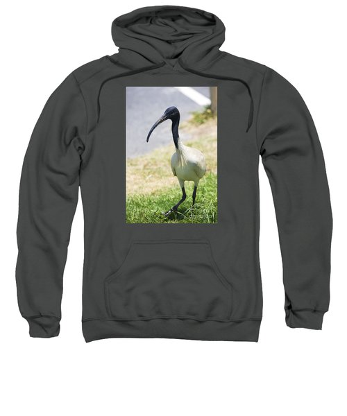 Carpark Ibis Sweatshirt by Jorgo Photography - Wall Art Gallery