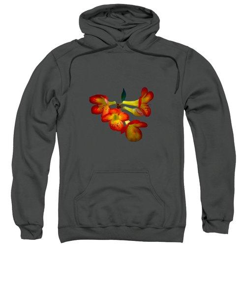 Color Burst Sweatshirt by Mark Andrew Thomas
