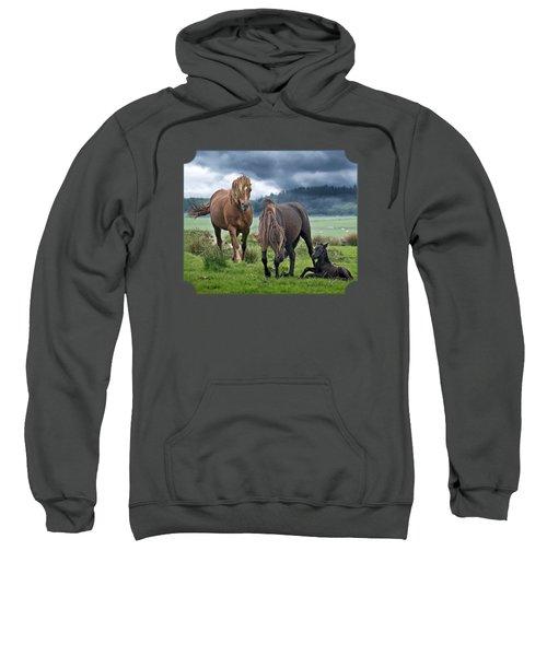 Dartmoor Ponies Sweatshirt by Gill Billington