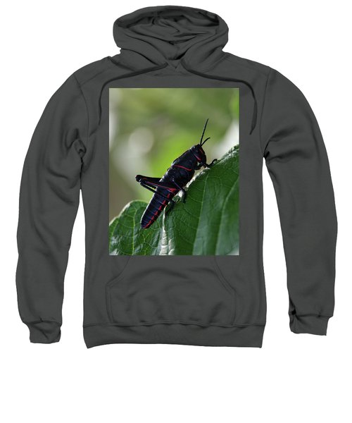 Eastern Lubber Grasshopper Sweatshirt by Richard Rizzo