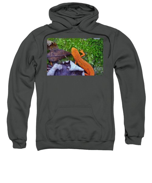 Eastern Newt Sweatshirt by David Rucker