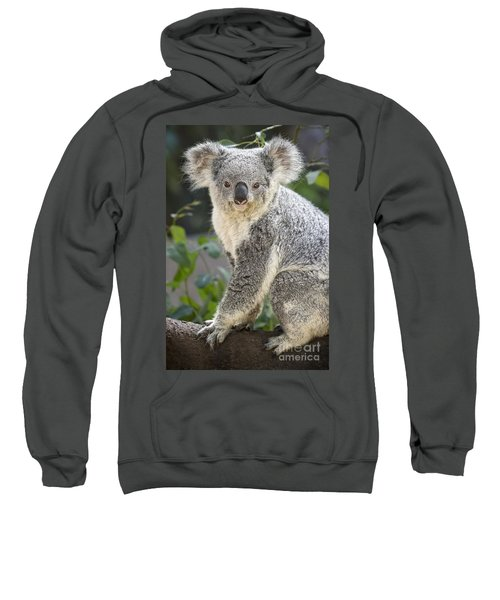 Female Koala Sweatshirt by Jamie Pham