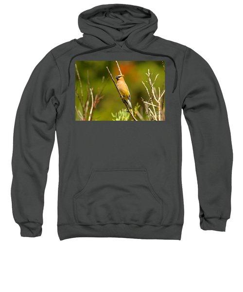Fishercap Cedar Waxwing Sweatshirt by Adam Jewell