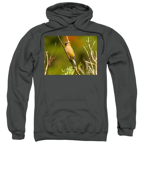 Glacier Cedar Waxwing Sweatshirt by Adam Jewell