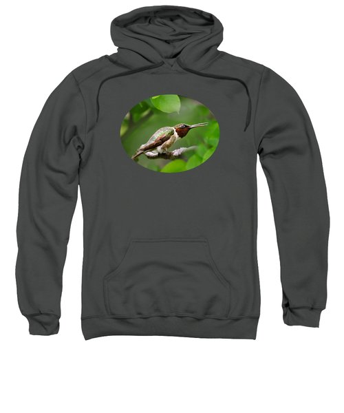 Hummingbird Hiding In Tree Sweatshirt by Christina Rollo