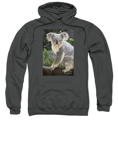 Koala Female Portrait Sweatshirt by Jamie Pham