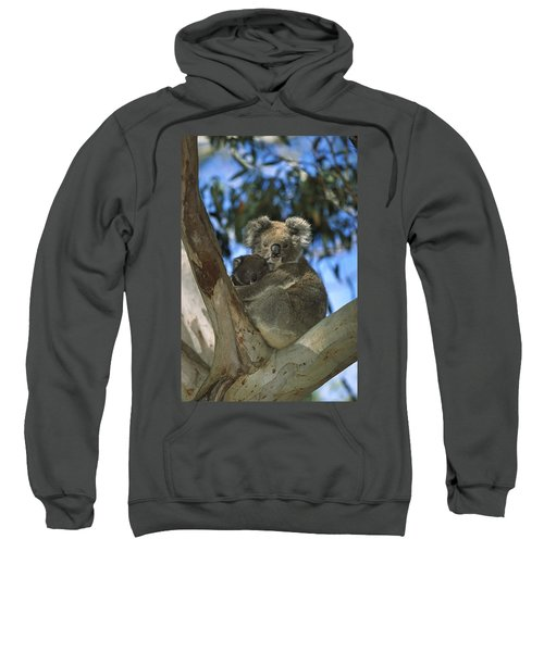 Koala Phascolarctos Cinereus Mother Sweatshirt by Konrad Wothe