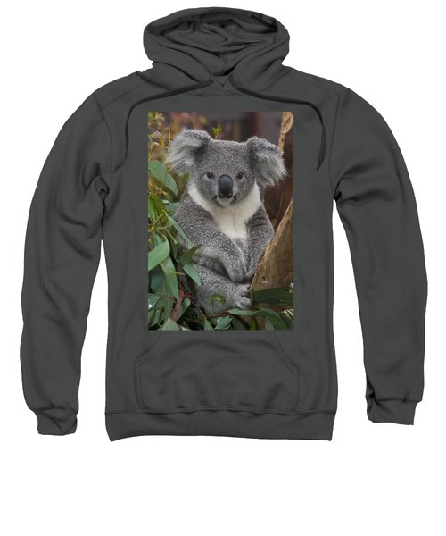 Koala Phascolarctos Cinereus Sweatshirt by Zssd