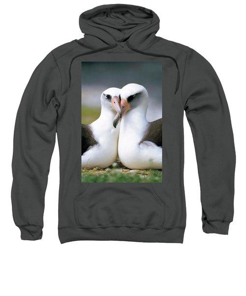 Laysan Albatross Phoebastria Sweatshirt by Tui De Roy