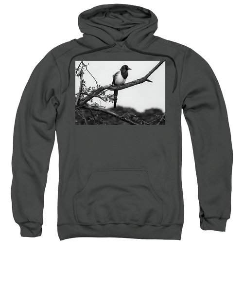 Magpie  Sweatshirt by Philip Openshaw