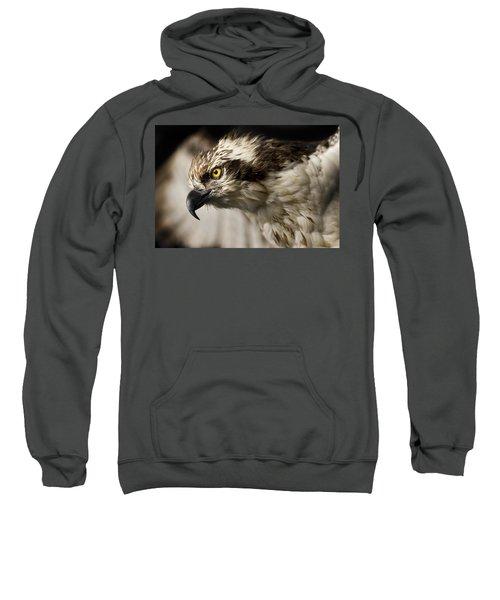 Osprey Sweatshirt by Adam Romanowicz
