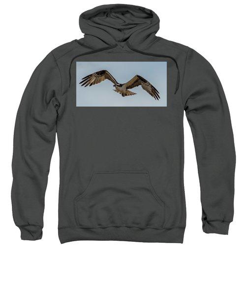 Osprey Flying Sweatshirt by Paul Freidlund