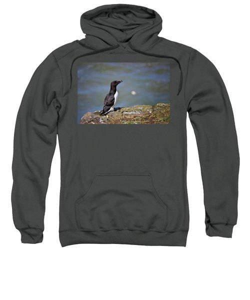 Razorbill Sweatshirt by Vicki Field