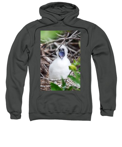 Red Footed Booby Chick Sweatshirt by Jess Kraft