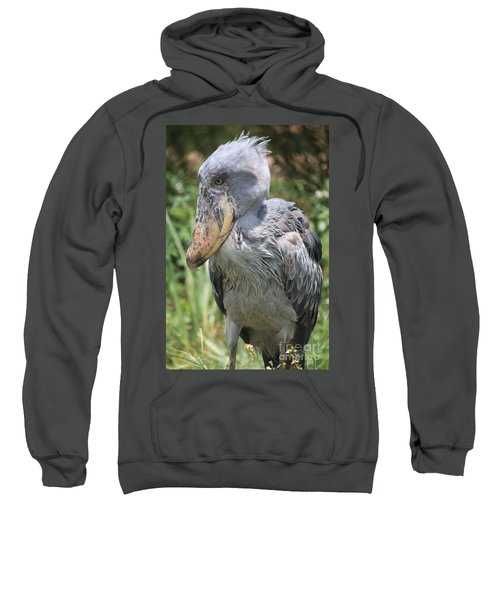 Shoebill Stork Sweatshirt by Carol Groenen