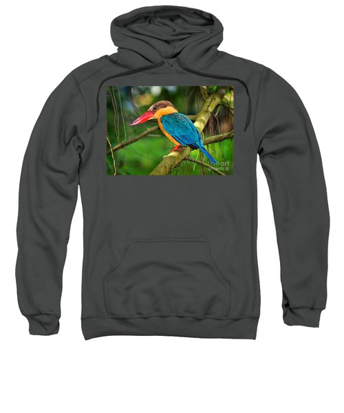 Stork-billed Kingfisher Sweatshirt by Louise Heusinkveld