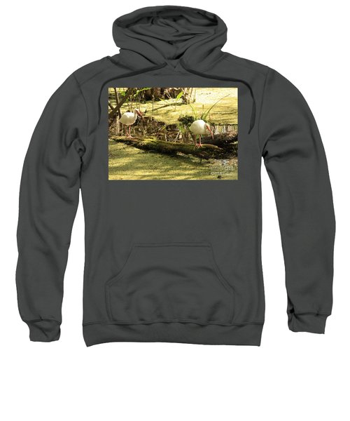 Two Ibises On A Log Sweatshirt by Carol Groenen
