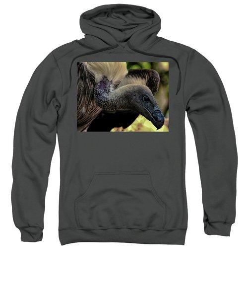 Vulture Sweatshirt by Martin Newman