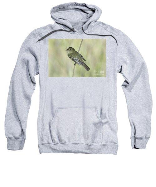 Acadian Flycatcher Sweatshirt by Anthony Mercieca