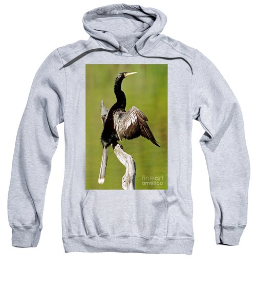 Anhinga Anhinga Anhinga Drying Plumage Sweatshirt by Millard H. Sharp