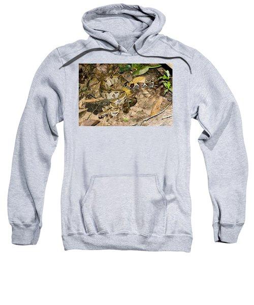 Boa Constrictor Sweatshirt by Gregory G. Dimijian, M.D.
