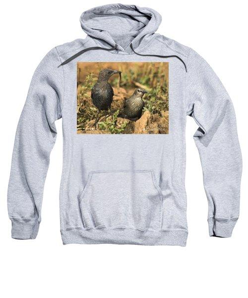 Starling Estornino Sweatshirt by Guido Montanes Castillo