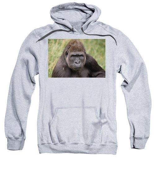 Western Lowland Gorilla Young Male Sweatshirt by Gerry Ellis