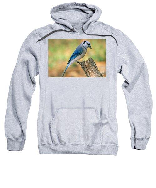 Blue Jay Sweatshirt by Millard H. Sharp