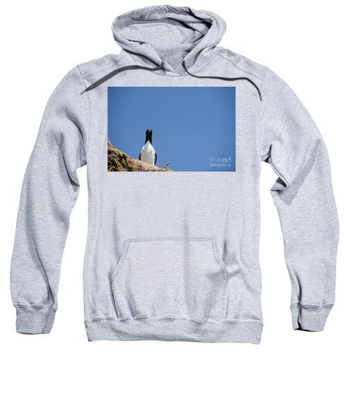 A Curious Bird Sweatshirt by Anne Gilbert