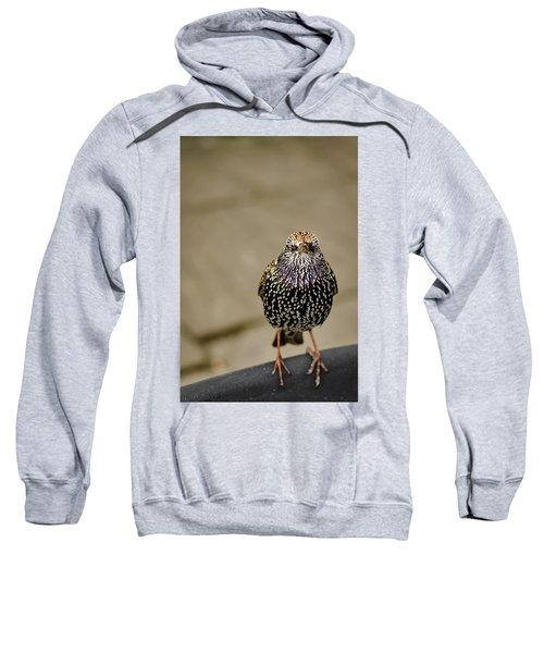 Angry Bird Sweatshirt by Heather Applegate