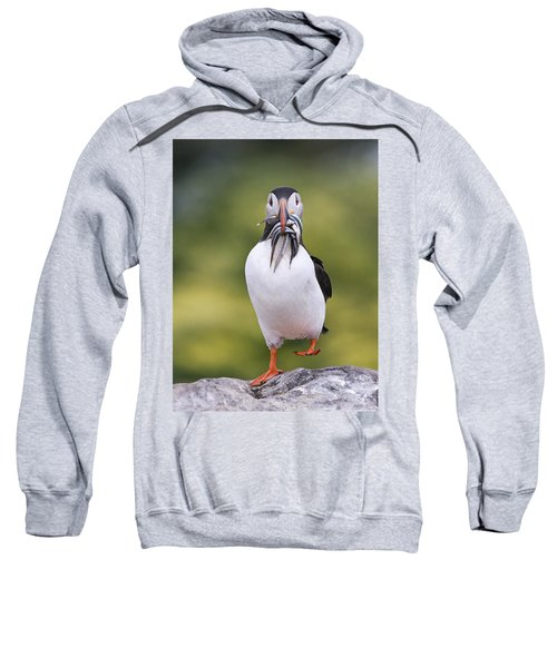 Atlantic Puffin Carrying Greater Sand Sweatshirt by Franka Slothouber