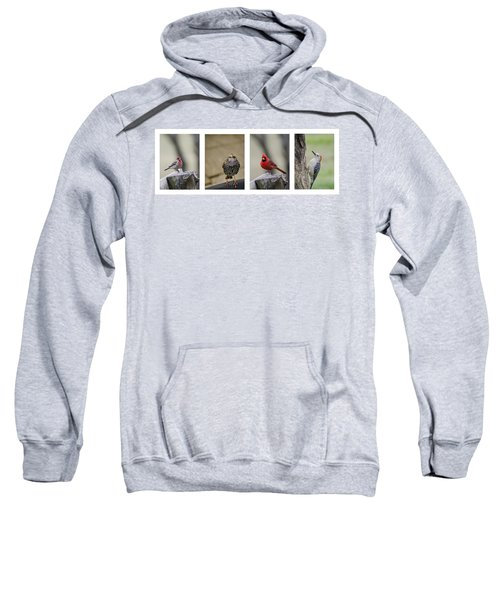 Backyard Bird Set Sweatshirt by Heather Applegate