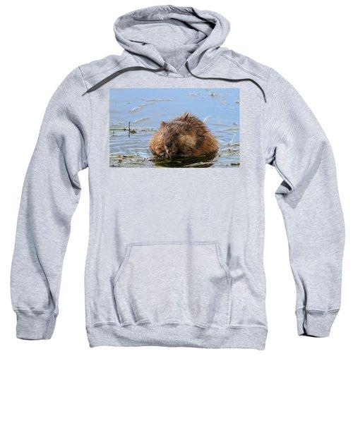 Beaver Portrait Sweatshirt by Dan Sproul
