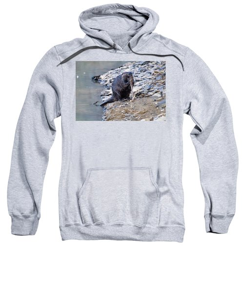 Beaver Sharpens Stick Sweatshirt by Chris Flees