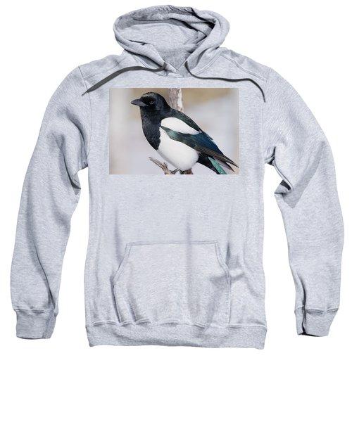 Black-billed Magpie Sweatshirt by Eric Glaser