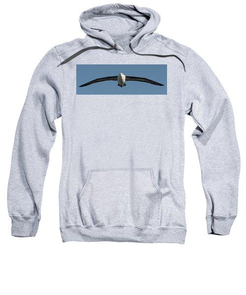 Black-browed Albatross Thalassarche Sweatshirt by Panoramic Images