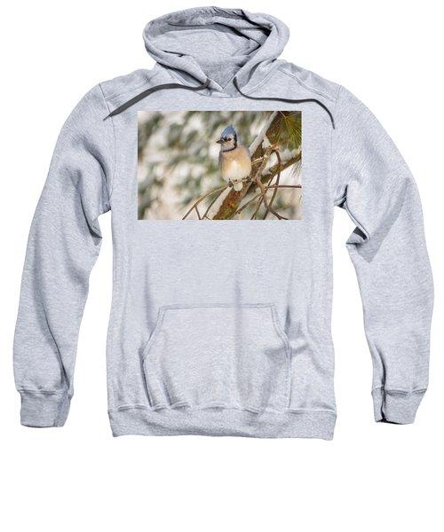 Blue Jay Sweatshirt by Everet Regal